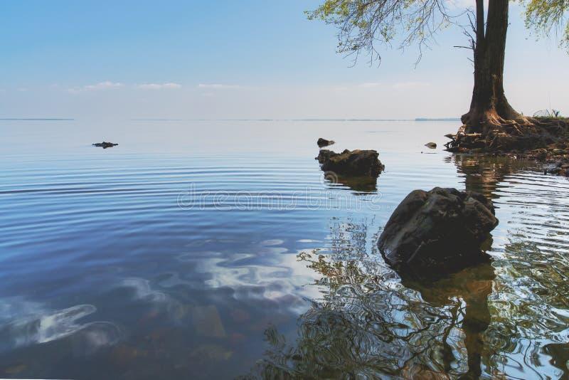 在海的偏僻的树天空的 免版税库存照片