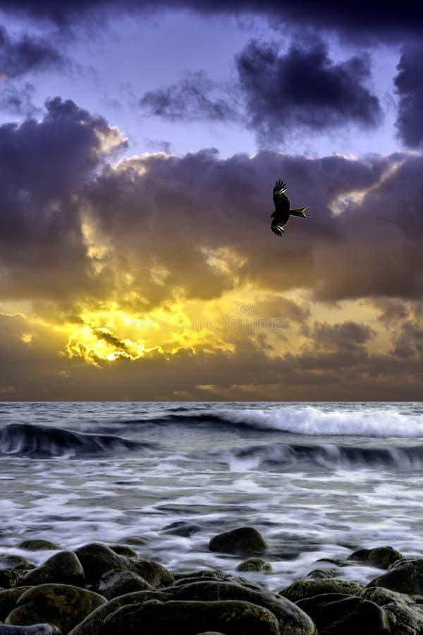 在海的剧烈的日出有飞行猎鹰的-古韦斯,克利特 免版税库存图片