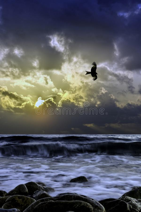 在海的剧烈的日出有飞行猎鹰的-古韦斯,克利特 免版税库存照片