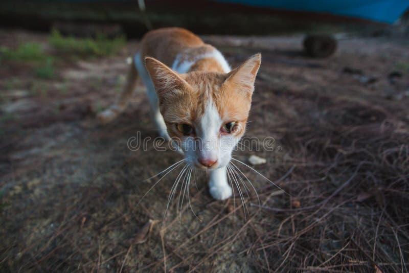 在海的海岸的猫 免版税库存图片