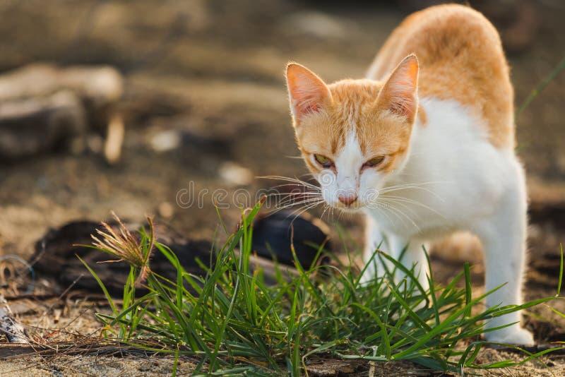 在海的海岸的猫 免版税库存照片