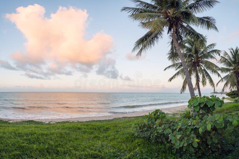 在海的海滩有棕榈树的 库存照片