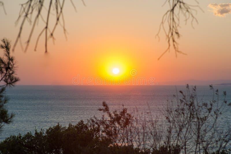 在海的温暖的日落通过植物 免版税库存图片
