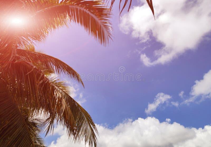 在海的热带棕榈分支 库存图片