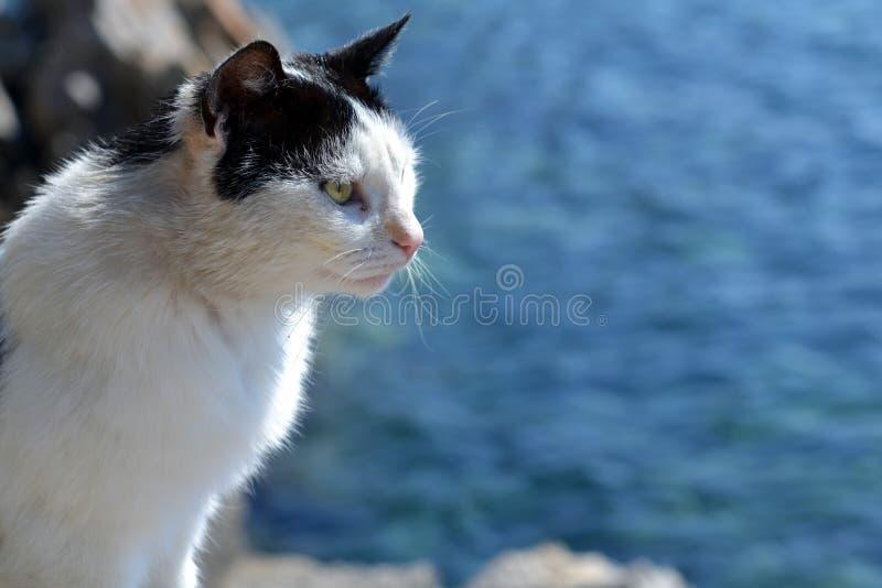 在海的猫 库存照片