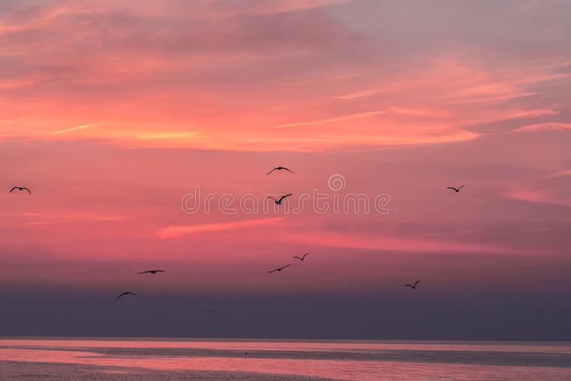 在海的美丽的日出天空有飞鸟剪影的, Vama Veche 库存照片
