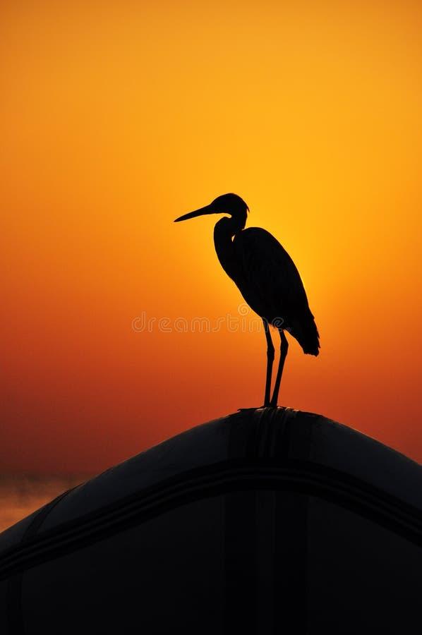 在海的美好的日落有红色和黄色光芒的反射的使用在与鸟的海滩波浪的海表面上的  免版税图库摄影