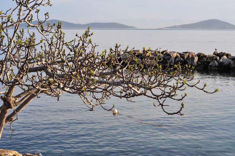 在海的老树 免版税库存图片