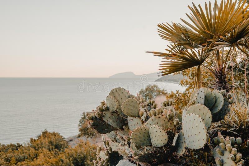 在海的背景的仙人掌仙人掌 库存照片