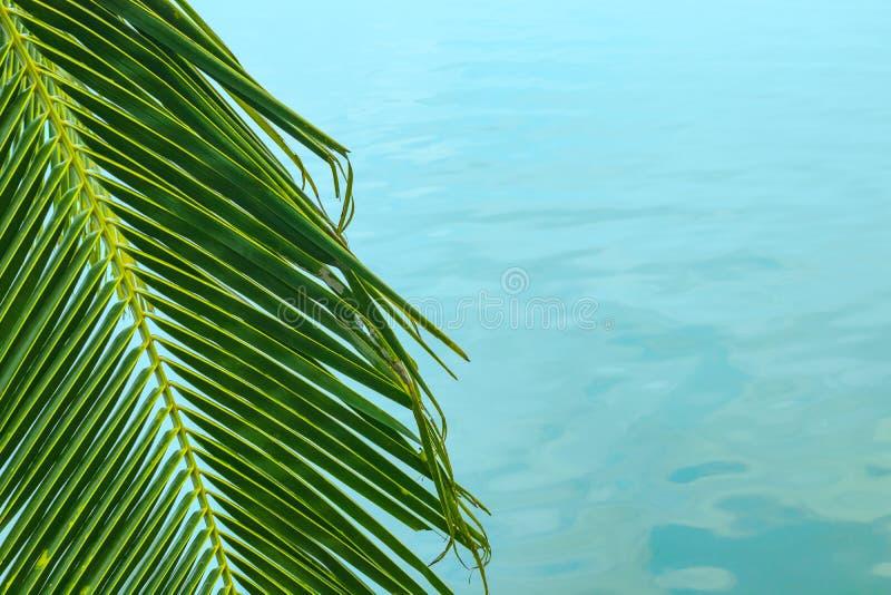 在海的背景的稀薄的棕榈分支 免版税库存图片