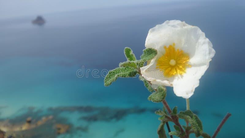 在海的花 免版税库存图片