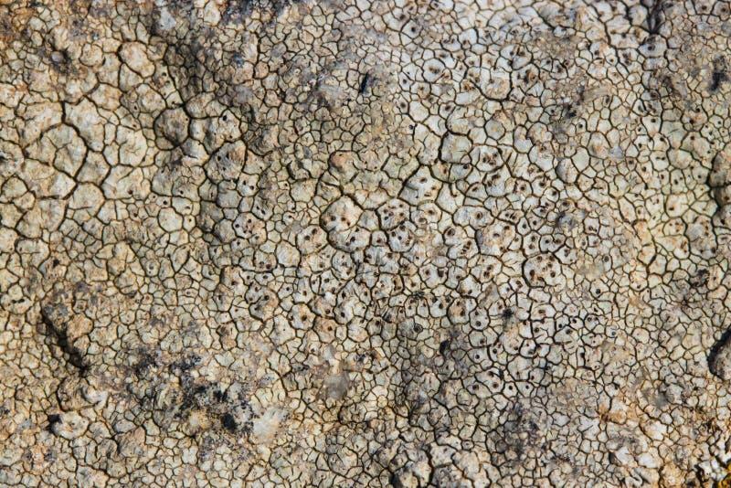 在海石头的表面纹理 在t的干裂纹发展 库存照片