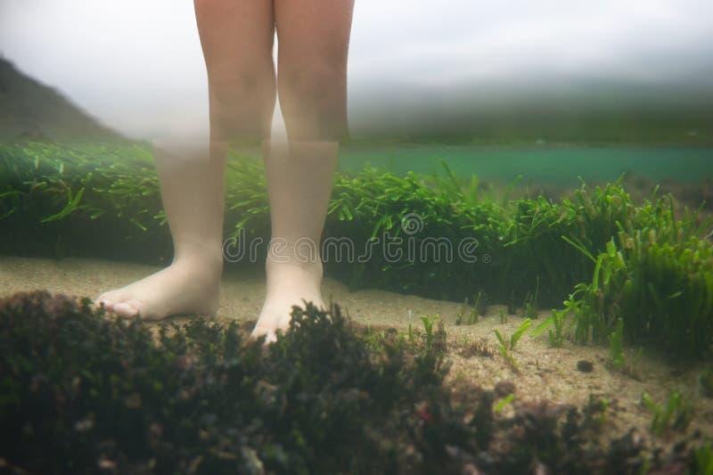 在海草中 库存图片