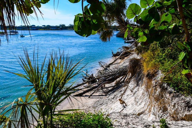 在海葡萄叶子和棕榈叶状体后 免版税库存照片