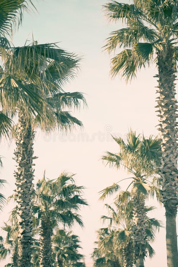 在海边大道的棕榈树 图库摄影