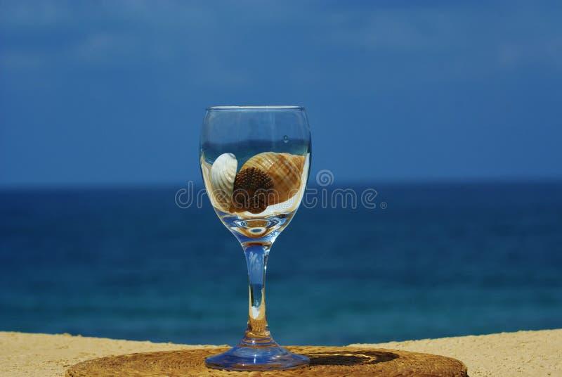 在海运壳酒里面的玻璃 库存图片