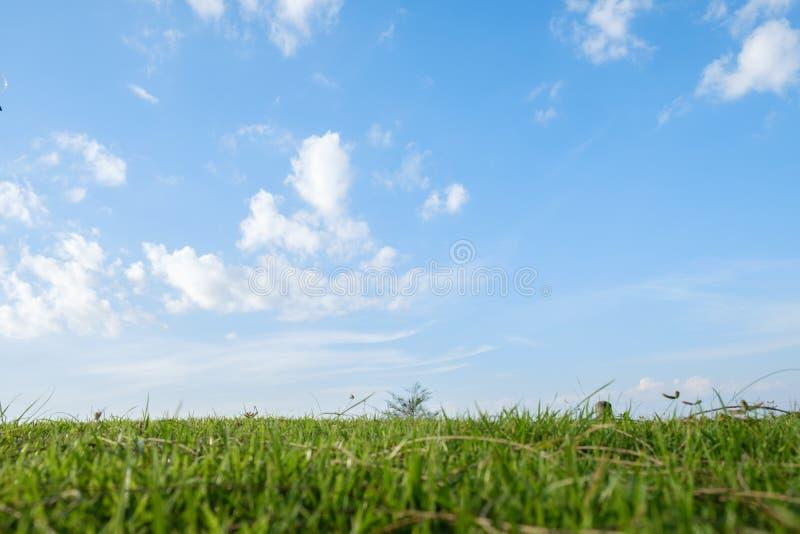 在海附近放牧在與藍天的晴天圖片