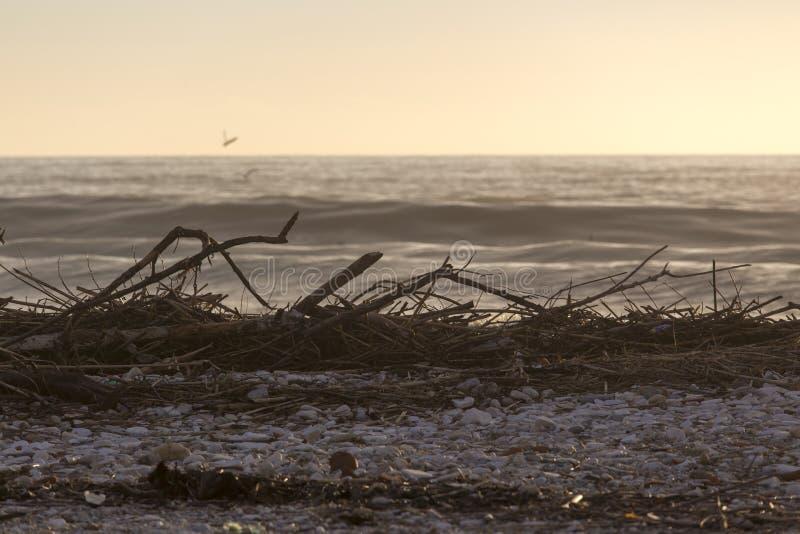 在海风暴以后的维亚雷焦海滩在冬时 免版税库存照片