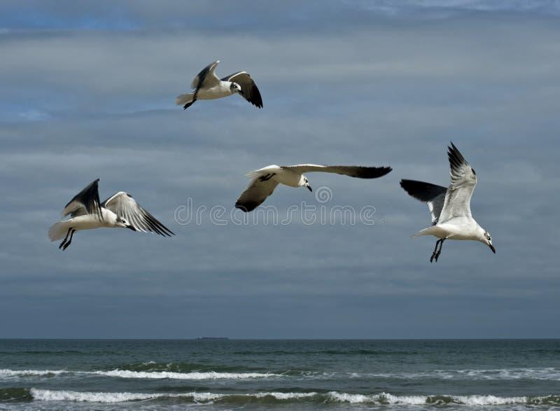 在海鸥得克萨斯的海滩 库存照片