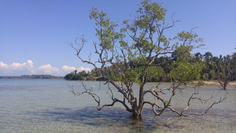 在海,泰国中间的偏僻的树 库存照片