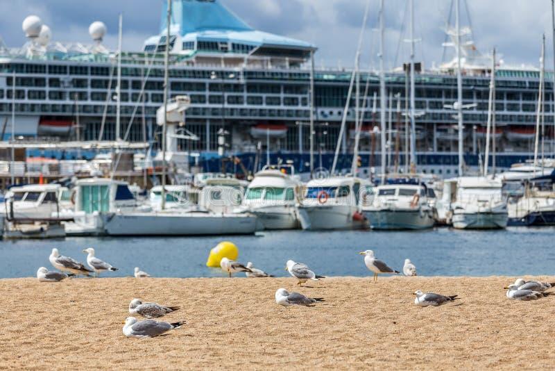 在海滩、渔夫小船和游轮的海鸥 免版税库存图片