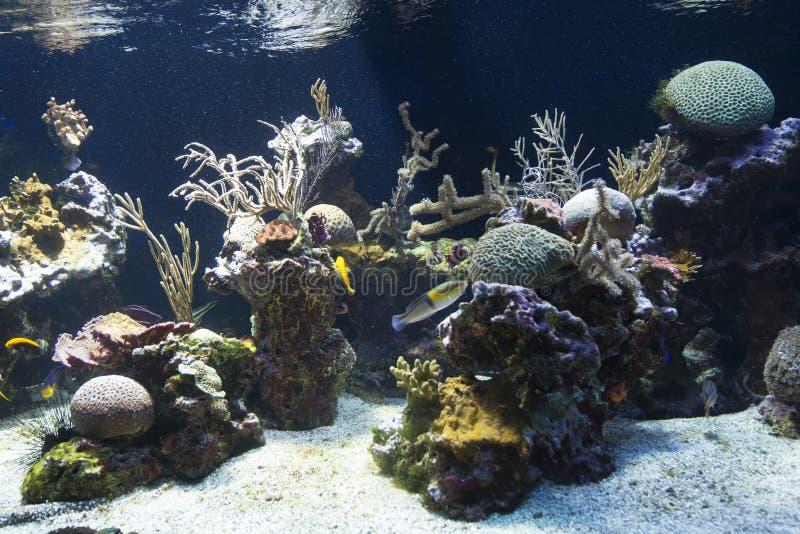 在海洋学博物馆摩纳哥的鱼缸 免版税库存图片