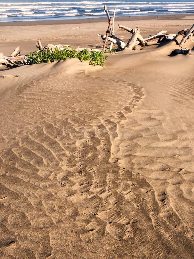 在海滩沙子的样式带领漂移木头 免版税库存照片