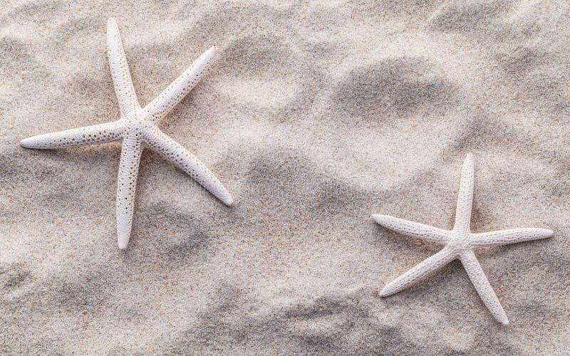 在海滩沙子的海星夏天和海滩的 库存图片