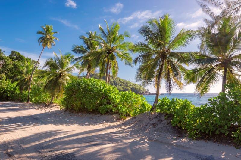 在海洋海岸的日落在Mahe海岛,塞舌尔群岛上 免版税图库摄影