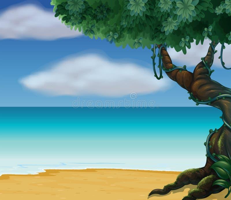 在海滩的一棵大树 皇族释放例证