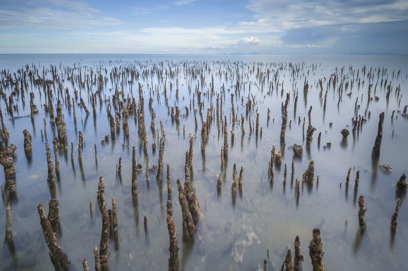 在海水的一点热带树早晨在拿笃海滩沙巴婆罗洲马来西亚的 免版税库存照片