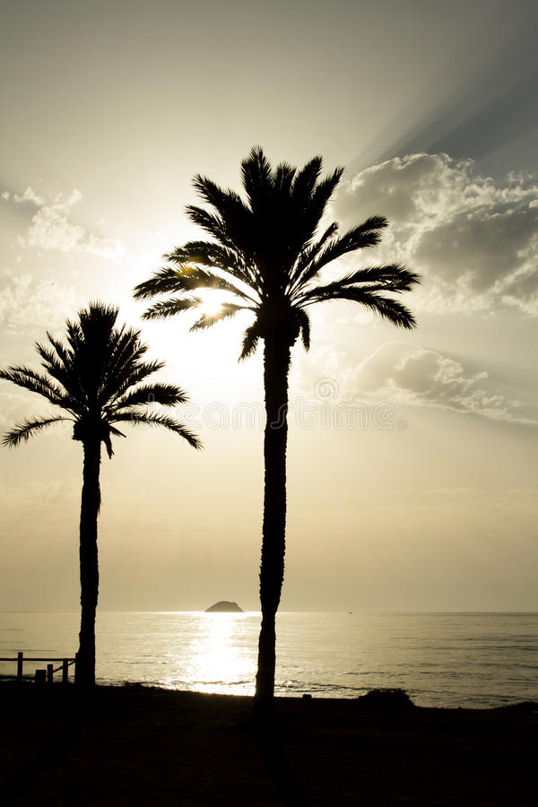 在海滩的两棵棕榈树 库存图片