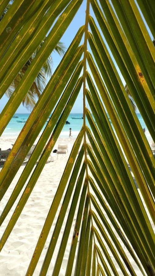 在海滩的偷看 库存图片