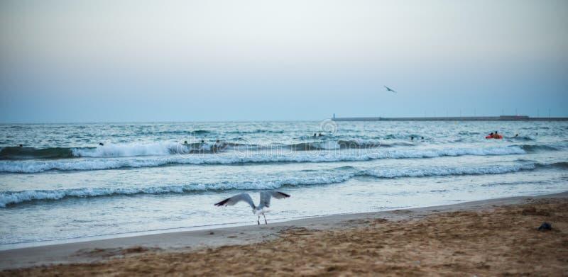 在海滩的全景日落 库存照片