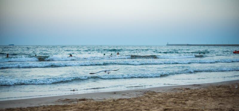 在海滩的全景日落 图库摄影