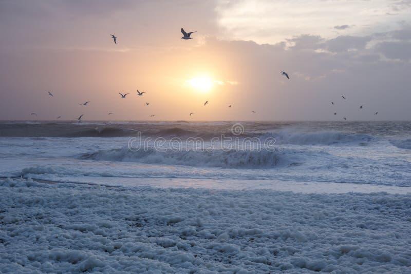 在海滩的冷的日落与海泡沫和鸟, Thisted,丹麦 免版税库存照片