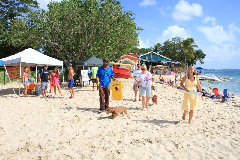 在海滩的动物庇护所天 免版税库存图片