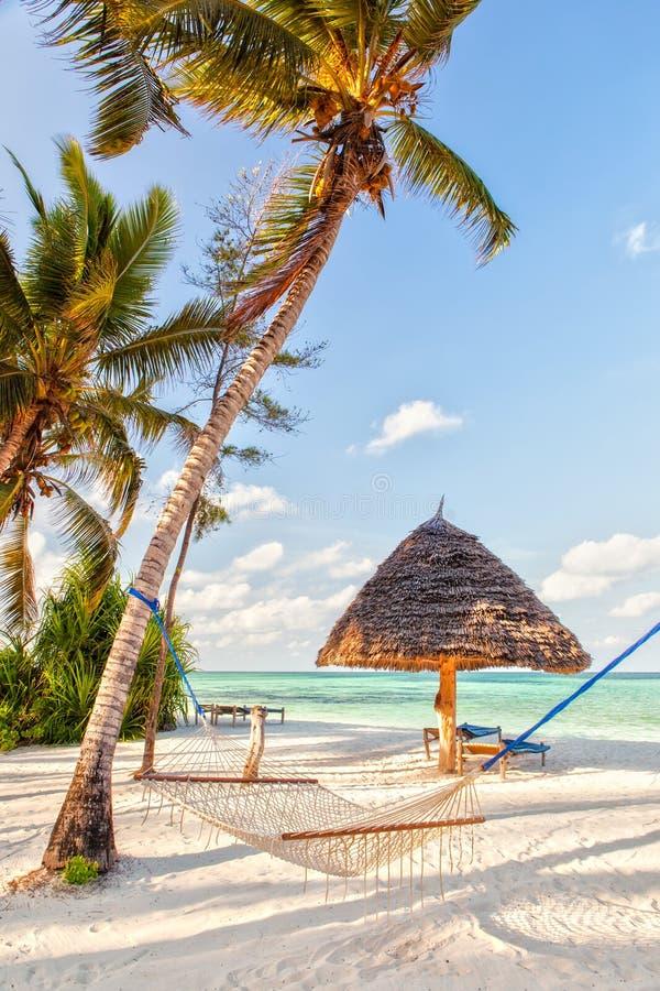 在海滩的吊床设置了在与阴影的两棵树之间在白色 免版税库存图片