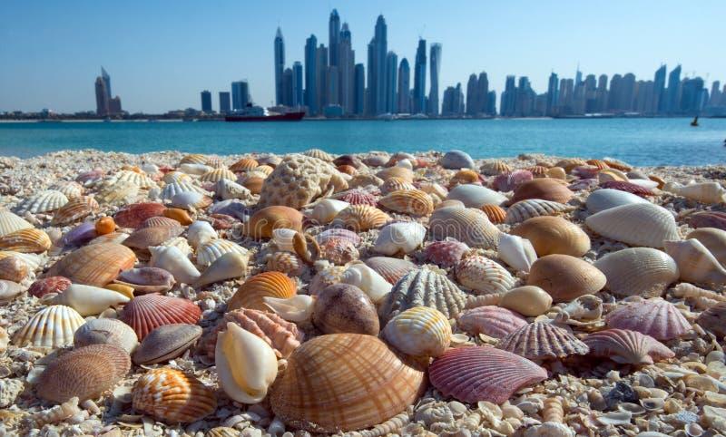 在海滩的壳在摩天大楼背景  图库摄影