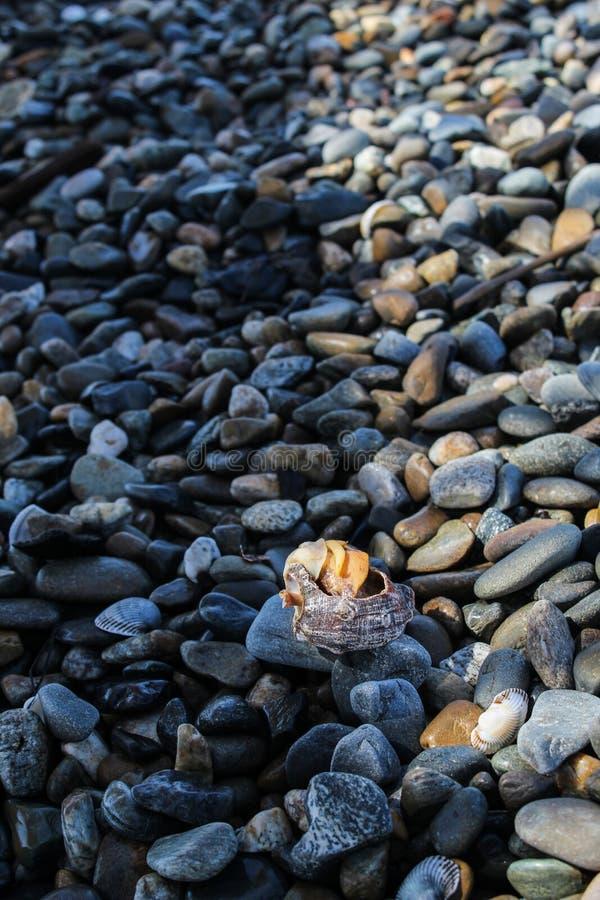 在海滩的壳 库存照片