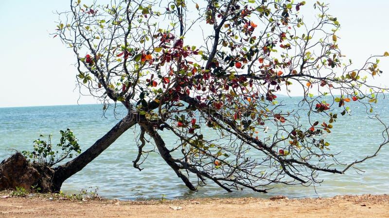 在海滩的夏天 免版税库存图片