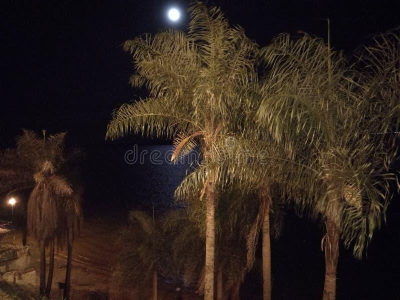 在海滩的夜 库存图片