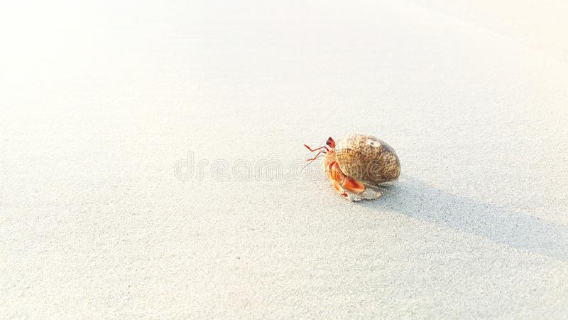 在海滩的寄居蟹 免版税库存照片