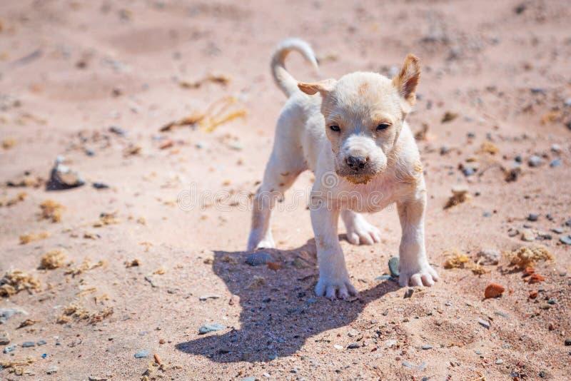 在海滩的无家可归的小狗 免版税库存照片
