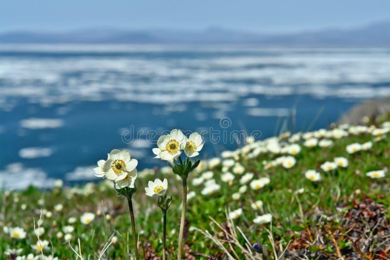 在海洋的春天花。 免版税图库摄影
