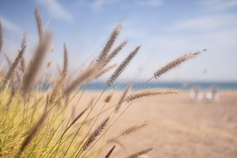 在海滩的松弛时间 免版税库存图片