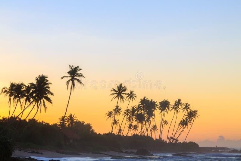在海滩的棕榈树在日落 免版税库存照片