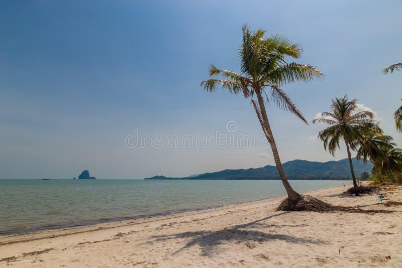 在海滩的椰子树 图库摄影