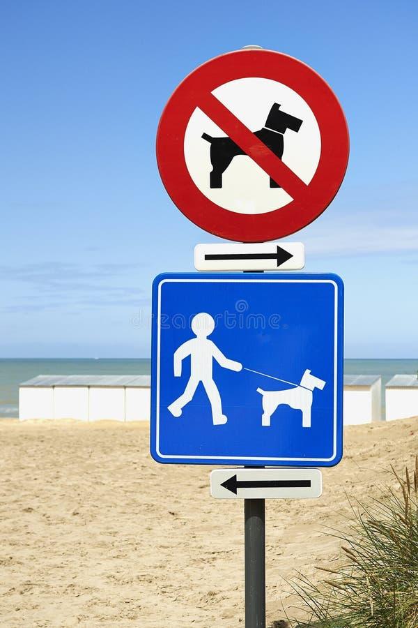 在海滩的没有在仅皮带的狗和狗 库存图片