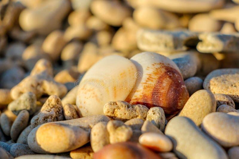 在海滩的海壳 库存图片